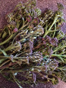 Purple Sprouting!