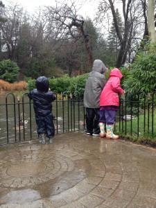 Feeding the ducks in the rain